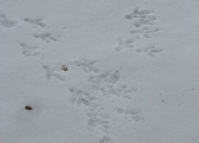 eagle tracks - photo #12