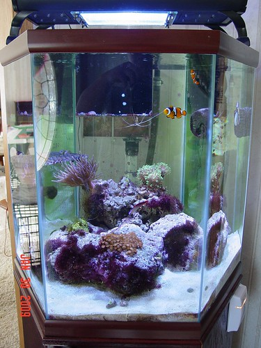 42 gallon hexagon large reefs nano forums for Hexagon fish tank