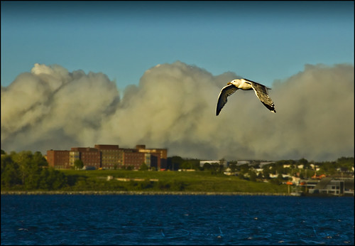 lake bird forest fire harbor flying waterfront harbour seagull gull smoke halifax porters lakeecho lowlevelflyby dsc2907nef