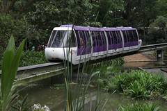 vehicle, train, transport, public transport, monorail, rolling stock,