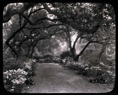 Unidentified Garden in Pasadena, California