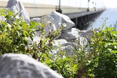 3-mile-bridge-butterfly-017