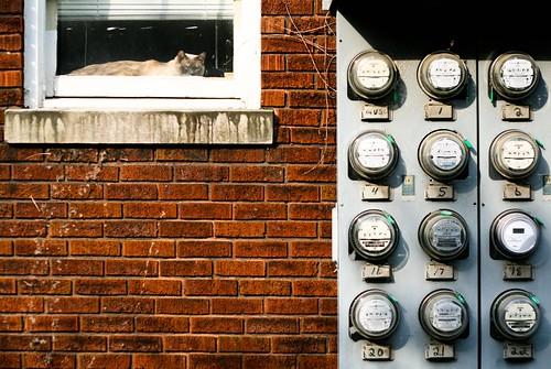 brick electric metal wall cat lexington kentucky kittie wattage voltagereader
