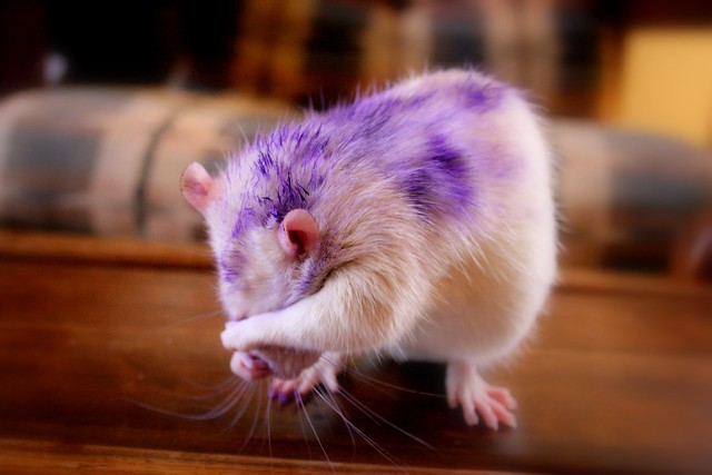 Please don't take photos of me! I'm purple and I'm shy!