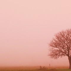 mes arbres