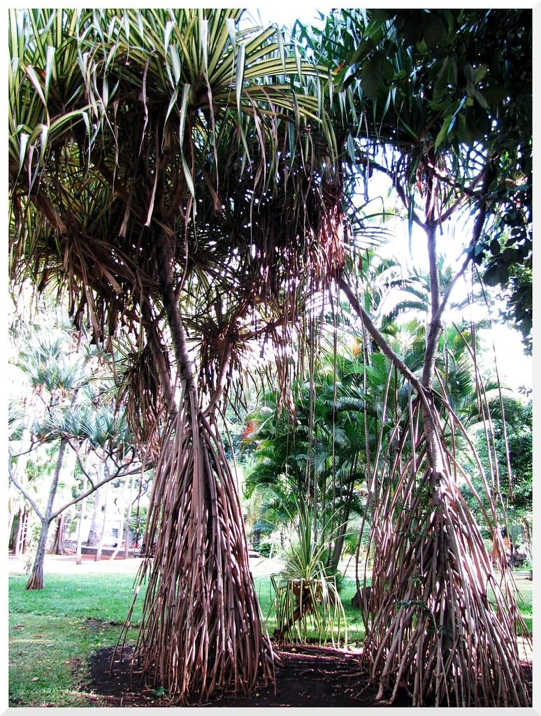 Minouche962 39 s most interesting flickr photos picssr for 9 jardin fatima bedar saint denis