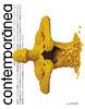 07 - Revista Contemporanea - Edição MAIO 2009