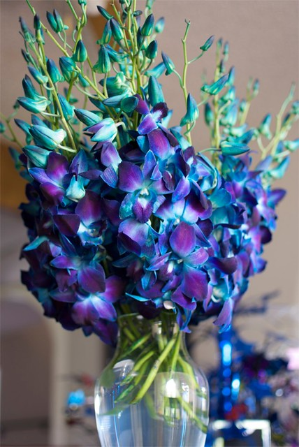 Dyed blue dendrobium orchids flickr photo sharing
