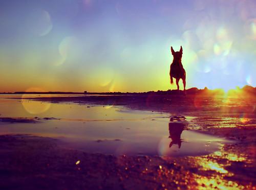 blue red dog chihuahua sol water yellow canon lights crazy jump agua sundown tiger colores laguna tigre boken xsi tartde