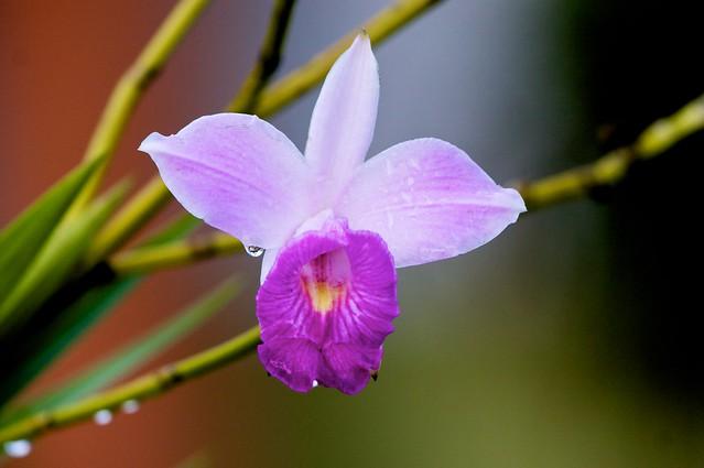Orquideas en el Parque Nacional del Café