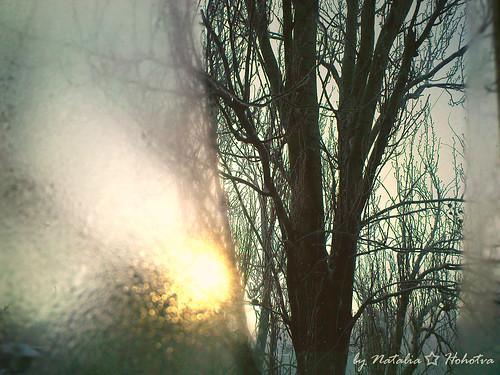 tree sunrise vinter widow