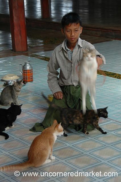 Jumping Cat Show at Monastery - Inle Lake, Burma