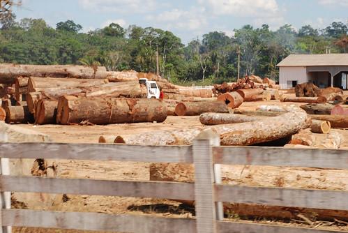 非法砍伐木材。(照片:joellehernandez。)