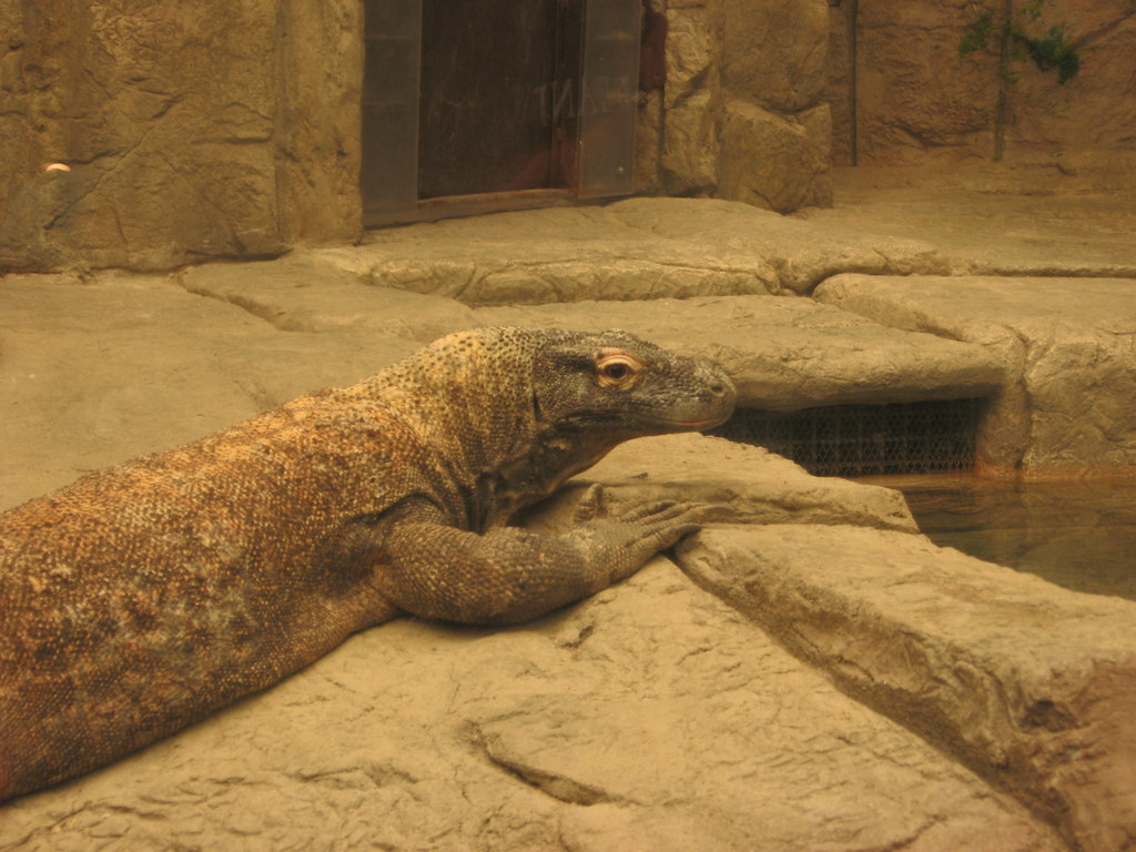 Nevada Public Aquarium : Komodo Dragon, Shark Reef Aquarium, Mandalay Bay, Las Vegas, Nevada (3 ...