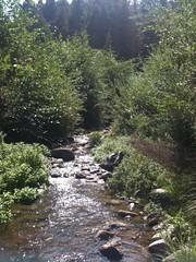 Henry Cowell Redwoods St Park