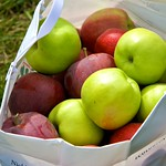Apples (six different kinds)