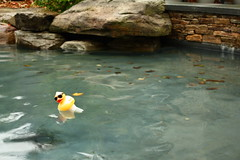 I Found the Duck