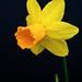 Narcissus Series (2008-2009)