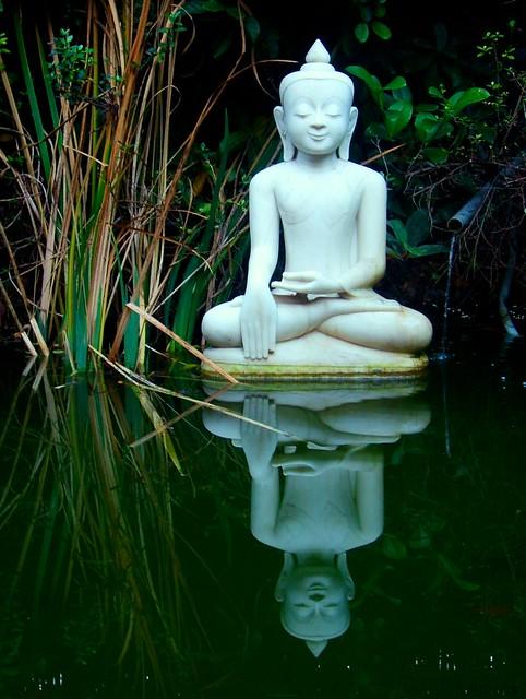 Reflect - Self - Reflect