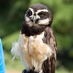 Woodland Park Zoo Seattle 071