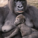 Baby & Mother Gorilla