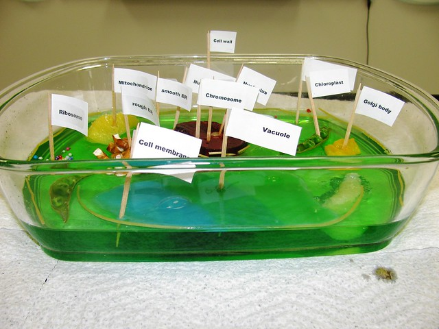 3D Edible Plant Cell Project http://www.flickr.com/photos/37730860@N07/4055790736/