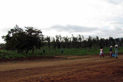 Dirt Road in area of Ngorongoro Crater Safari - Ngorongoro Conservation Area - Tanzania, Africa