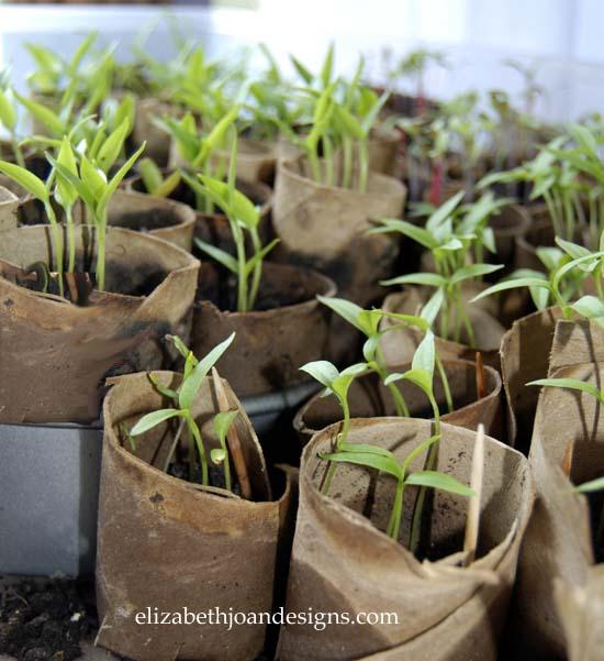 Starting Plants In Toilet Paper Rolls Elizabeth Joan Designs