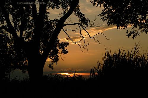sunset tree nature grass silhouette evening neighborhood wetland