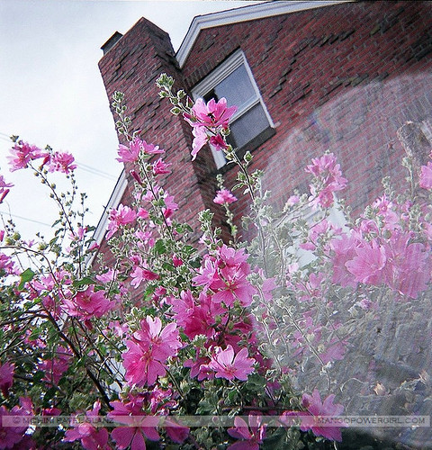bricks & petals