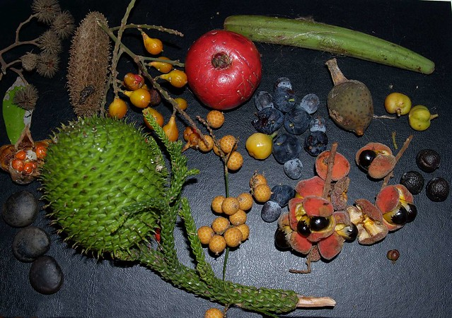 Rainforest Fruits - a gallery on Flickr