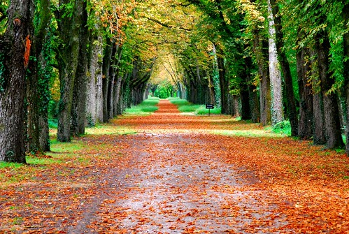Nature in autumn colours (Loire Valley, center pf France)