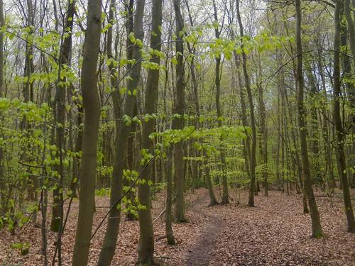 Emergent greenery