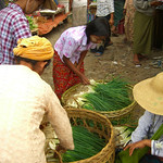 Women Carefully Choosing Onions - Nam Pan, Burma