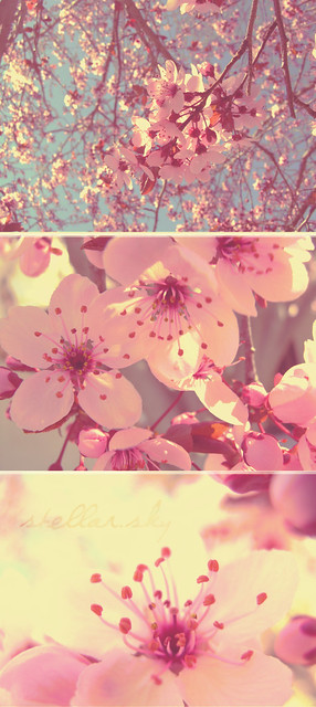the cherry blossoms send, Nikon E4800