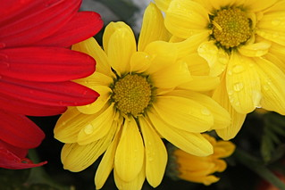Yellow and red