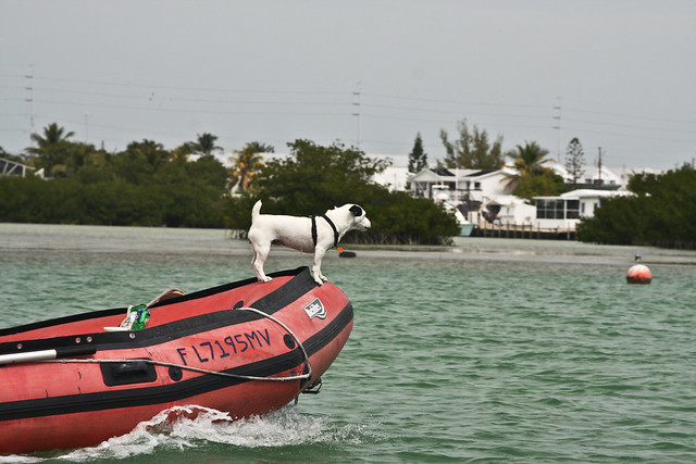 Dog & dinghy