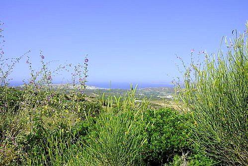 Achladia - Olivenhain - Aussicht auf Sitia und das Meer