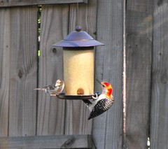 finch(0.0), bluebird(0.0), perching bird(1.0), bird feeder(1.0), lighting(1.0), bird(1.0),