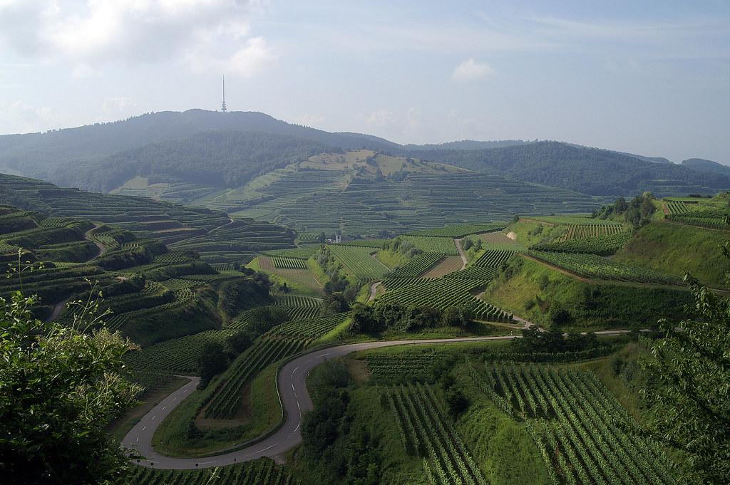 مزارع العنب ألمانيا الجمال والطبيعه