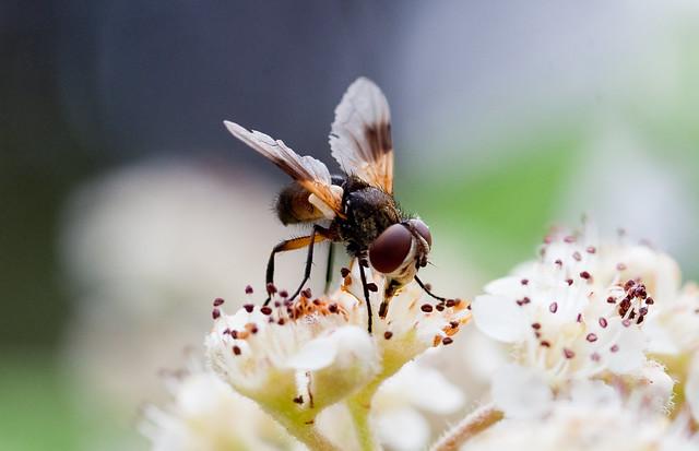 Natura - Insectos