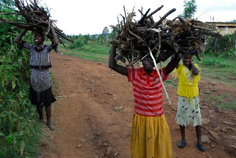 Children gathering firewood in Kenya
