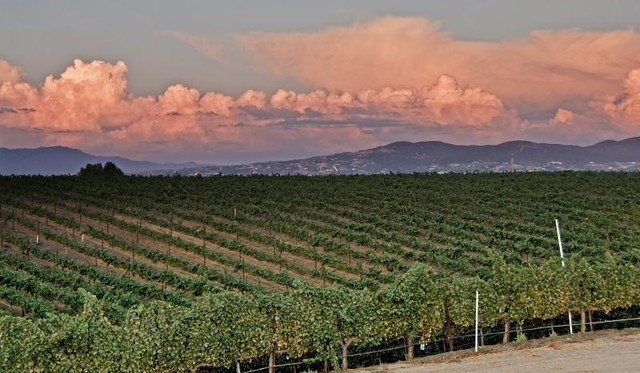 Temecula Valley Wine Country Tours
