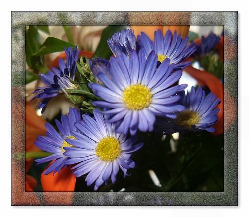 "Фотография: ""Midwinter Bluezzzzz..."" Автор: capegirl52"