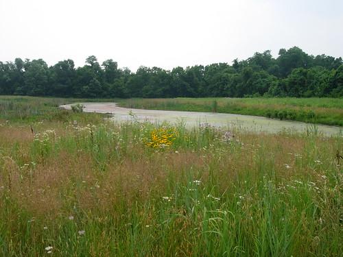 wetland chilo chilolock34park