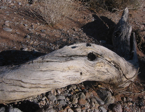 Tree Beast in Calico Basin Wash