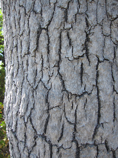 Image Result For White And Oak