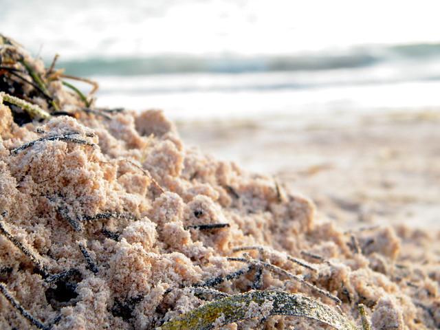 Sand and Seaweed   Punta Cana Sunrise - www miss604 com/tag