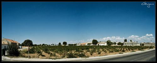 Arenales de San Gregorio