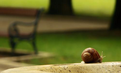 fountain bench pad snail parade revolution pécs tsg tér csiga ivókút